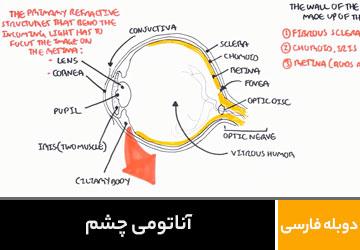آناتومی چشم
