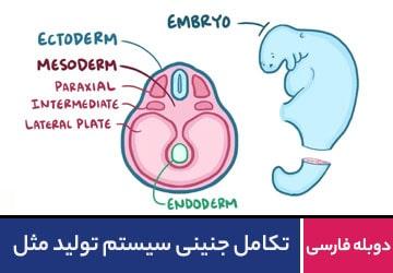 تکامل جنینی سیستم تولید مثل