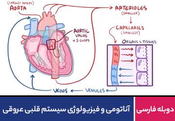 آناتومی و فیزیولوژی سیستم قلبی عروقی