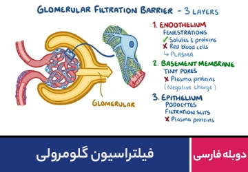 فیلتراسیون گلومرولی