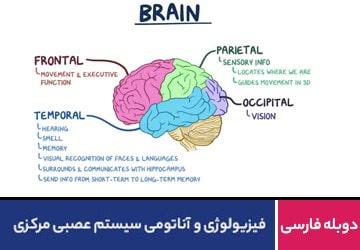 فیزیولوژی و آناتومی سیستم عصبی مرکزی