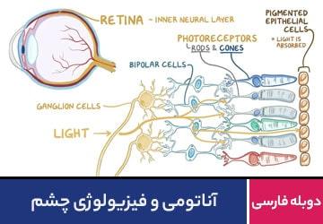 آناتومی و فیزیولوژی چشم