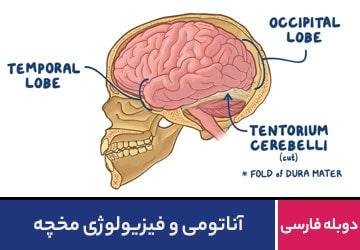 آناتومی و فیزیولوژی مخچه