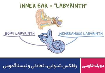 رفلکس شنوایی-تعادلی و نیستاگموس