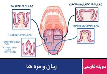 زبان و مزه ها