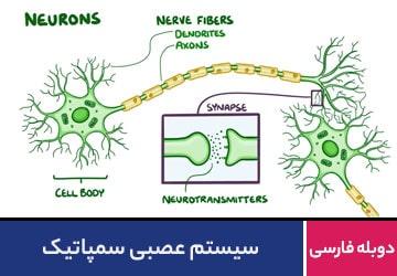 سیستم عصبی سمپاتیک